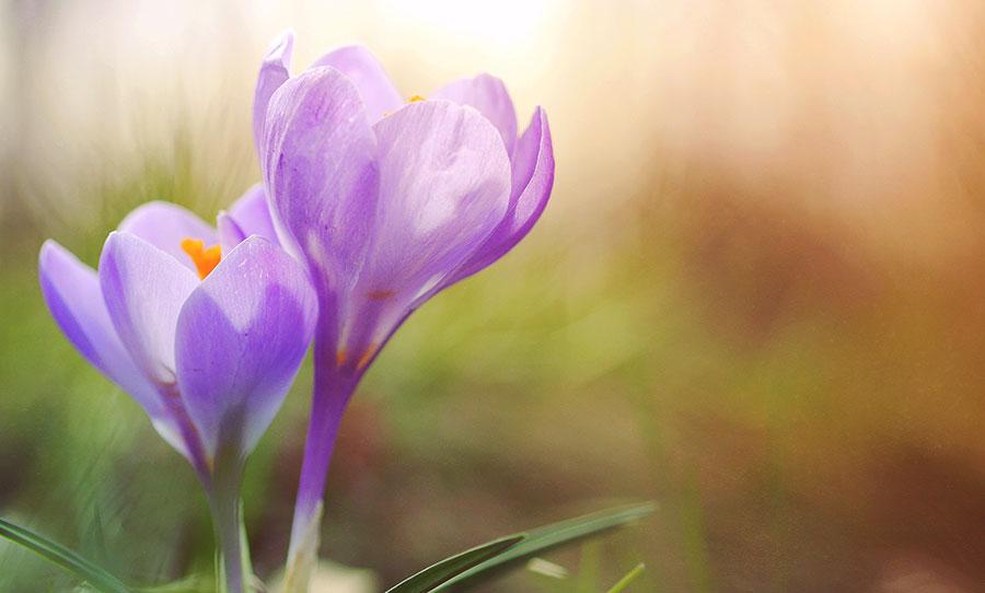 Wiosna patrzy przez nasze okna