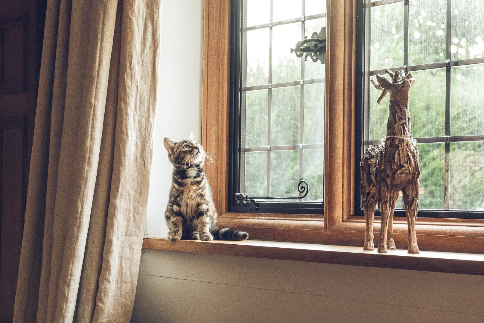 Koty lubią okna drewniane